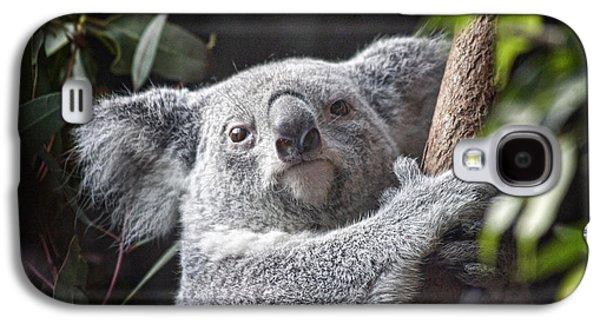 Koala Bear Galaxy S4 Case by Tom Mc Nemar