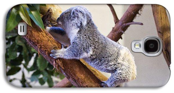Koala Climbing Tree Galaxy S4 Case by Chris Flees