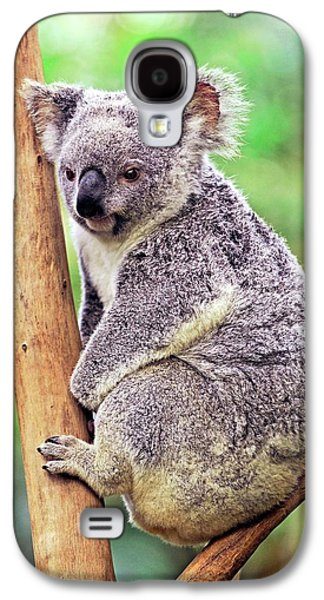 Koala In A Tree Galaxy S4 Case by Bildagentur-online/mcphoto-schulz