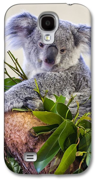 Koala On Top Of A Tree Galaxy S4 Case by Chris Flees