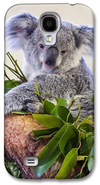 Koala On Top Of A Tree Galaxy S4 Case
