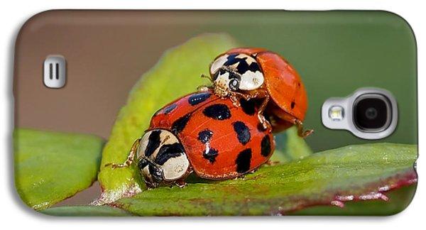 Ladybird Coupling Galaxy S4 Case by Rona Black