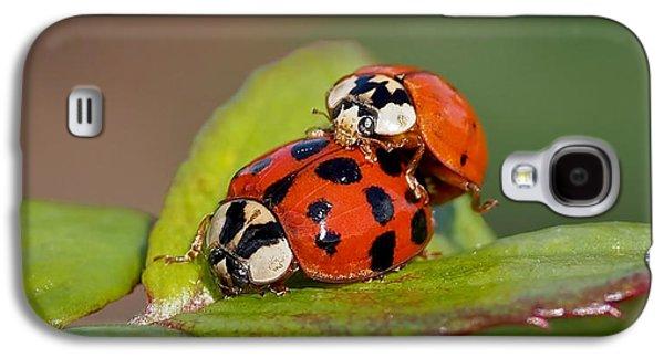 Ladybird Coupling Galaxy S4 Case