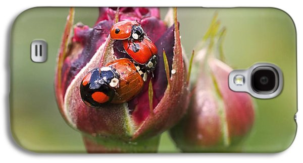 Ladybug Foursome Galaxy S4 Case by Rona Black