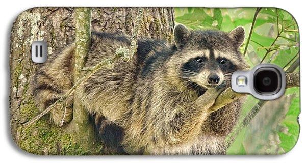 Lazy Day Raccoon Galaxy S4 Case by Jennie Marie Schell