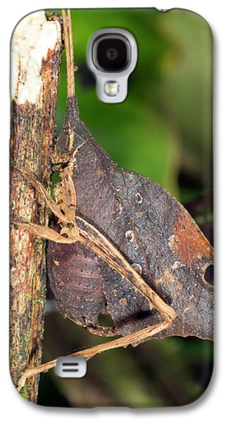 Leaf Mimic Katydid Galaxy S4 Case by Dr Morley Read