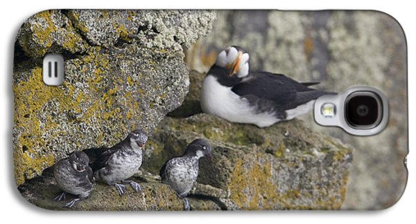 Least Auklets Perched On A Narrow Ledge Galaxy S4 Case