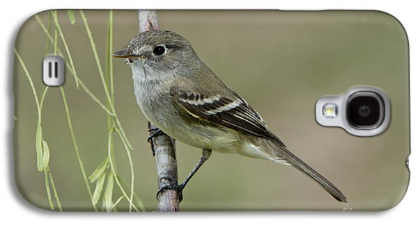 Least Flycatcher Galaxy S4 Case by Anthony Mercieca