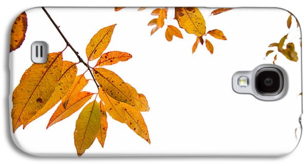Leaves Changing Galaxy S4 Case by Karol Livote