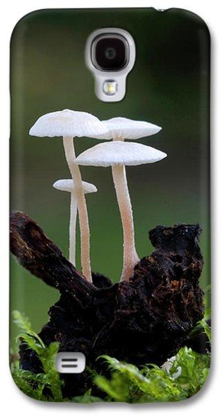 Lentil Shanklet Fungus Galaxy S4 Case by Nigel Downer