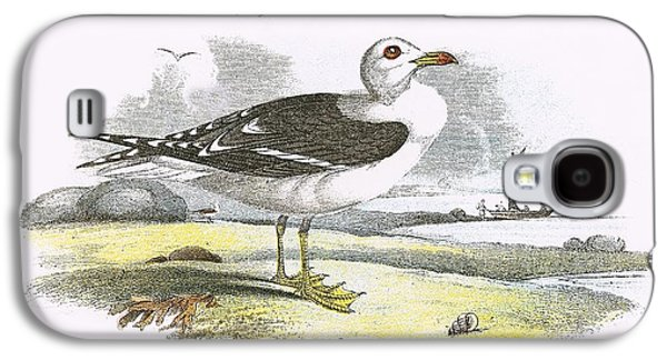 Lesser Black Backed Gull Galaxy S4 Case