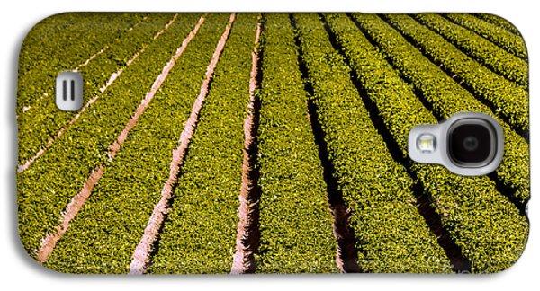 Lettuce Farming Galaxy S4 Case