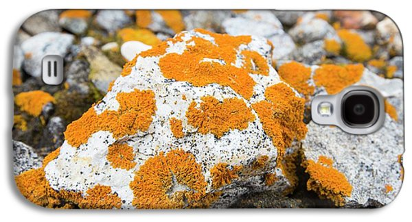Lichen Covered Pebbles On A Raised Beach Galaxy S4 Case by Ashley Cooper