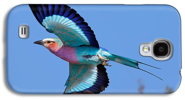 Lilac-breasted Roller In Flight Galaxy S4 Case