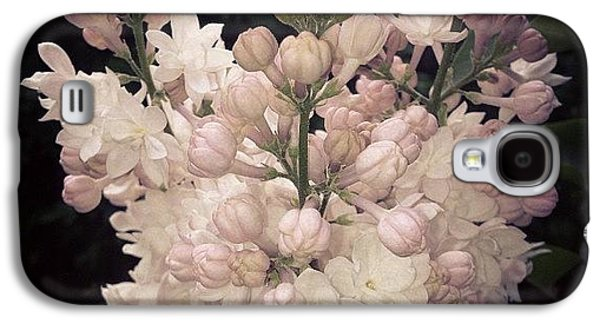 Beautiful Galaxy S4 Case - Lilacs Are Blooming by Christy Beckwith