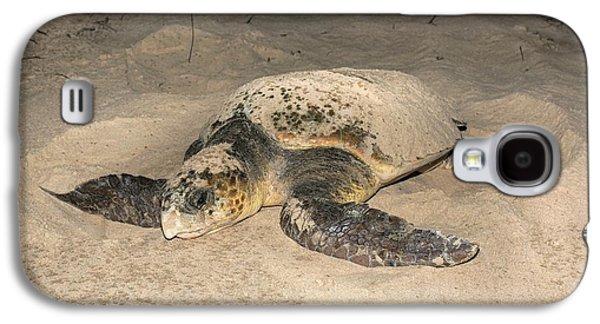 Loggerhead Turtle Covering Its Nest Galaxy S4 Case by Tony Camacho