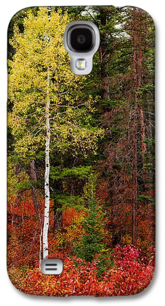 Lone Aspen In Fall Galaxy S4 Case by Chad Dutson