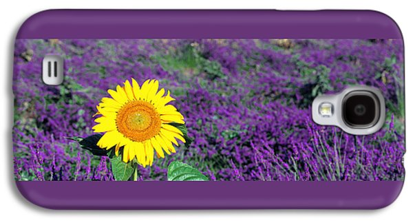 Lone Sunflower In Lavender Field France Galaxy S4 Case by Panoramic Images