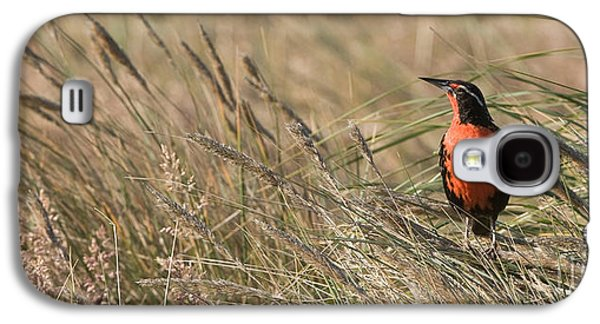 Long-tailed Meadowlark Galaxy S4 Case by John Shaw