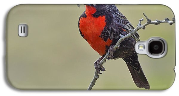 Long-tailed Meadowlark Galaxy S4 Case by Tony Beck