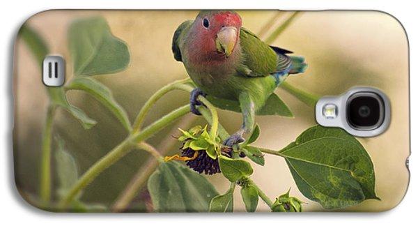 Lovebird On  Sunflower Branch  Galaxy S4 Case by Saija  Lehtonen