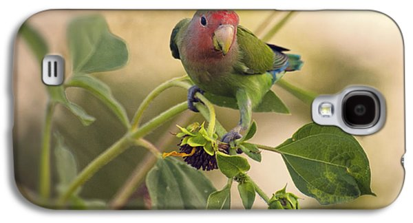 Lovebird On  Sunflower Branch  Galaxy S4 Case