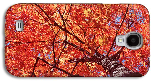Low Angle View Of A Maple Tree, Acadia Galaxy S4 Case by Panoramic Images