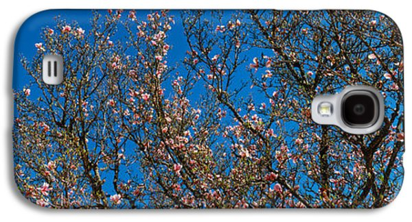 Low Angle View Of Cherry Trees Galaxy S4 Case