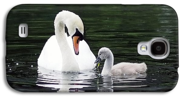 Lunchtime For Swan And Cygnet Galaxy S4 Case by Rona Black