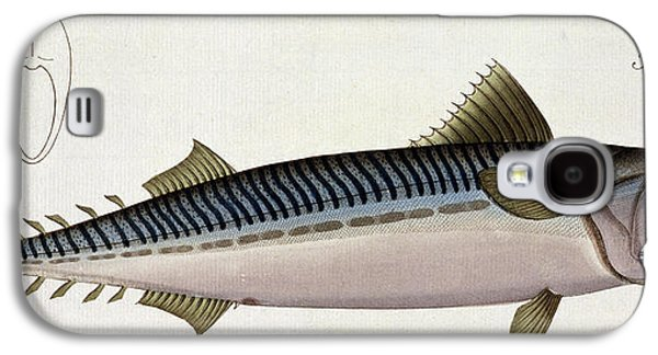 Mackerel Galaxy S4 Case by Andreas Ludwig Kruger