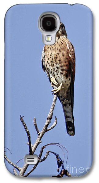 Madagascar Kestrel Galaxy S4 Case
