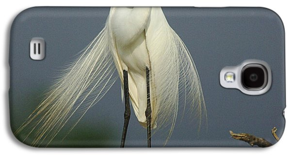 Majestic Great Egret Galaxy S4 Case by Bob Christopher