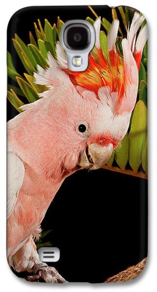 Cockatoo Galaxy S4 Case - Major Mitchell's Cockatoo, Lophochroa by David Northcott