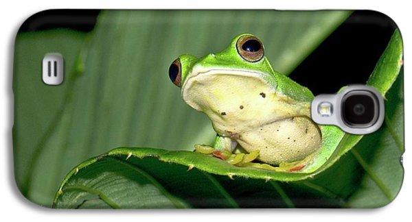 Malabar Gliding Frog Galaxy S4 Case by K Jayaram