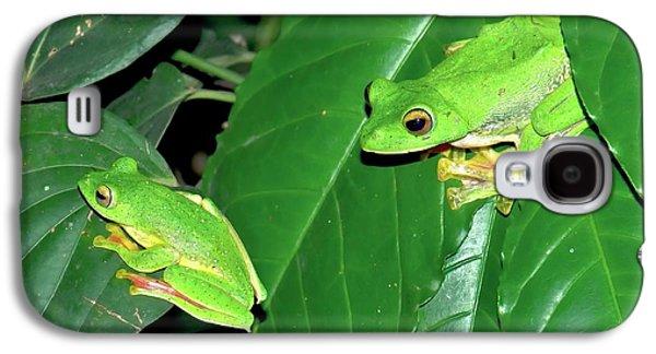 Malabar Gliding Frogs Galaxy S4 Case by K Jayaram