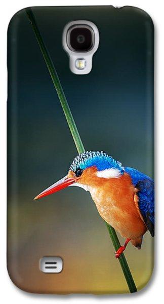 Nobody Galaxy S4 Case - Malachite Kingfisher by Johan Swanepoel