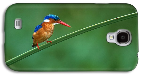 Malachite Kingfisher Tanzania Africa Galaxy S4 Case by Panoramic Images