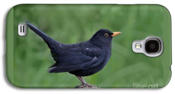 Male Blackbird Turdus Merula Galaxy S4 Case by Liz Leyden