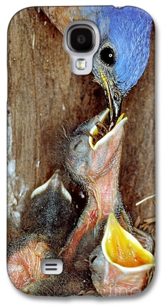 Male Bluebird Feeding Chicks Galaxy S4 Case by Millard H. Sharp