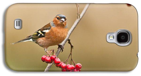 Male Chaffinch Fringilla Coelebs With Berries Galaxy S4 Case by Liz Leyden