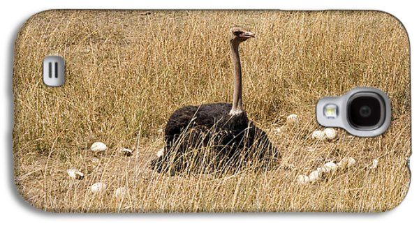 Male Ostrich Sitting On Communal Eggs Galaxy S4 Case by Gregory G. Dimijian, M.D.