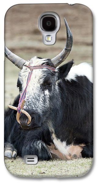 Male Yak In Potatso National Park Galaxy S4 Case by Tony Camacho
