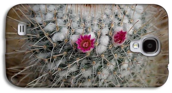 Mammillaria Geminispina Galaxy S4 Case