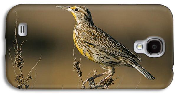 Meadowlark On Weed Galaxy S4 Case by Robert Frederick