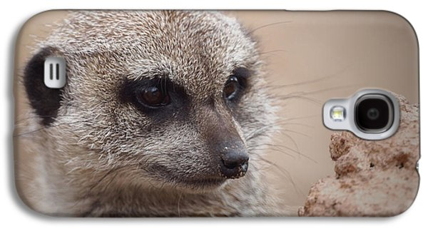 Meerkat 7 Galaxy S4 Case by Ernie Echols