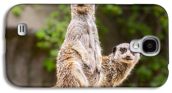 Meerkat Pair Galaxy S4 Case by Jamie Pham