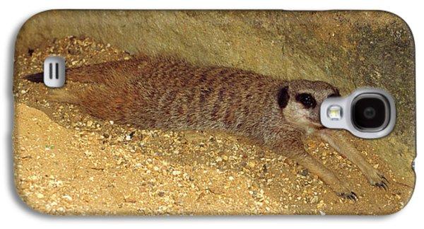 Meerkat Resting Galaxy S4 Case