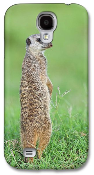 Meerkat Standing On Guard Duty Galaxy S4 Case