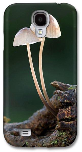 Milking Bonnet Fungi (mycena Galopus) Galaxy S4 Case by Nigel Downer
