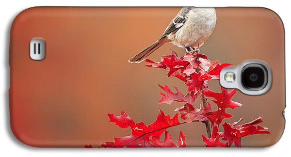 Mockingbird Autumn Square Galaxy S4 Case by Bill Wakeley